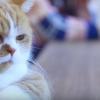 シム太郎横のふてにゃん猫・春馬クンもかわいい!ワイモバイル【動画あり】
